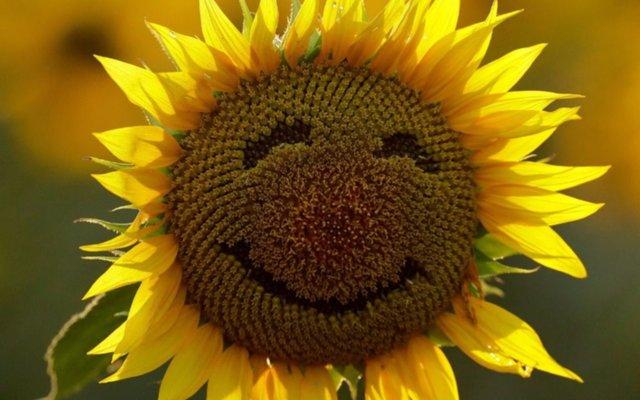 Noruega, el país más feliz de todos: ¿y Argentina?