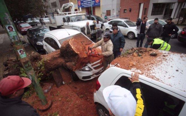 Así quedaron los dos autos que fueron aplastados por un árbol en 4 y 46