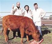Rosita, una vaca argentina, es la primera del mundo en producir leche maternizada