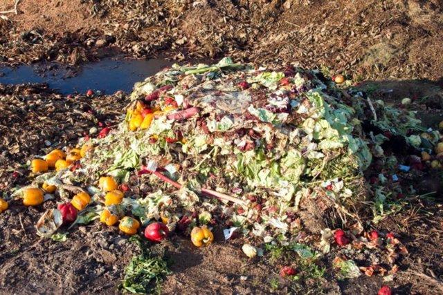 Apps: cuando la tecnología ayuda a no desperdiciar la comida