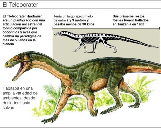 """Presentan en La Plata al """"eslabón perdido"""" entre aves y dinosaurios"""