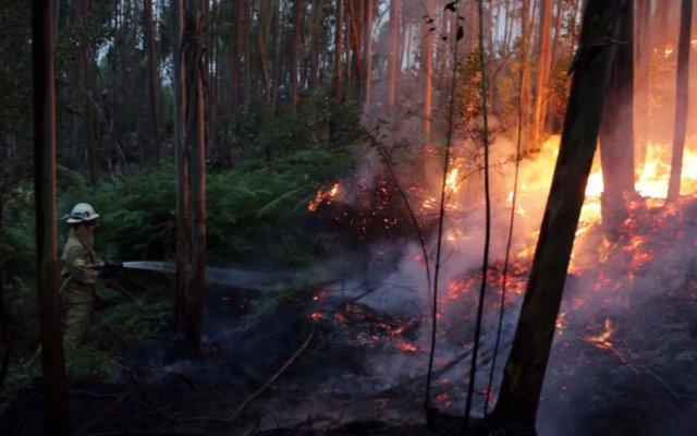 Ya son 57 los muertos por incendios forestales en Portugal