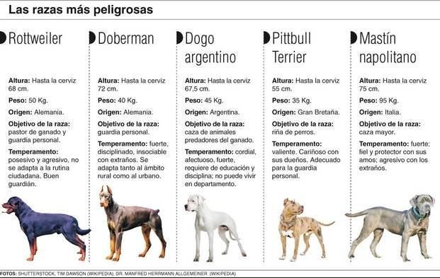 Una nueva muerte reinstala la polémica por los perros peligrosos