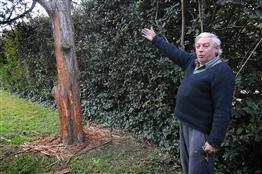 Temen que haya un puma suelto en zona de Villa Elisa