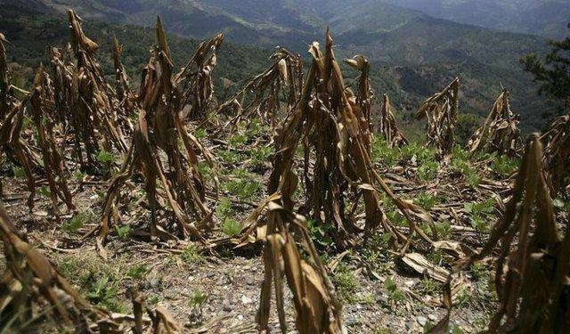 Por el cambio climático aseguran que se extinguirán muchos parásitos hacia el 2070