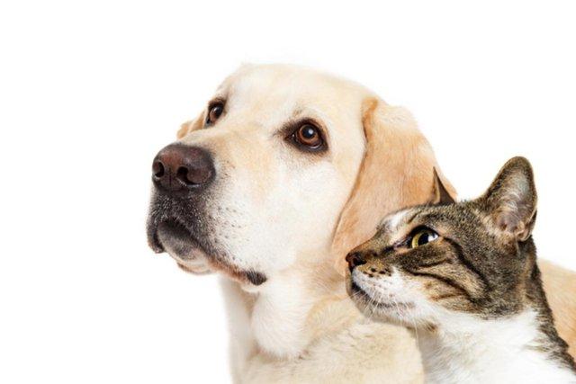 Advierten sobre los excrementos de mascotas en los espacios públicos