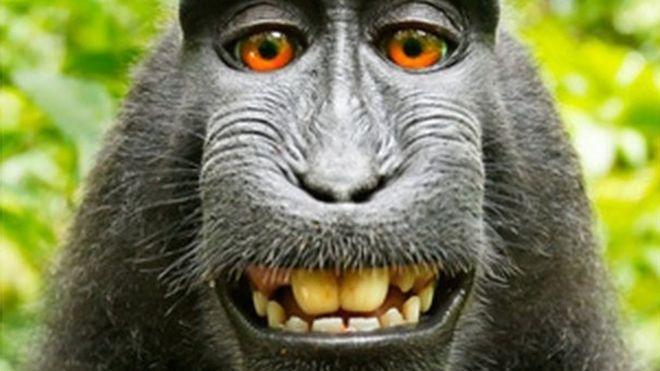 En la demanda por los derechos de autor de una selfie famosa, el fotógrafo le ganó al mono