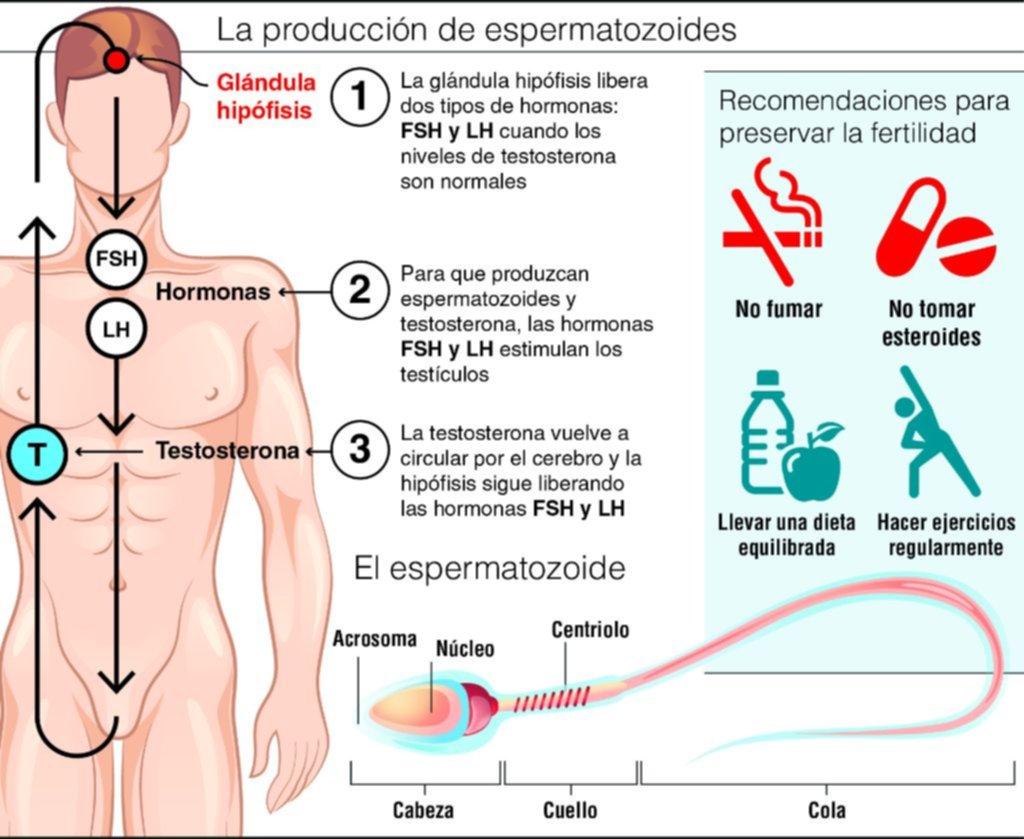 ¿Estamos condenados? Mala calidad de esperma podría causar extinción de especie humana
