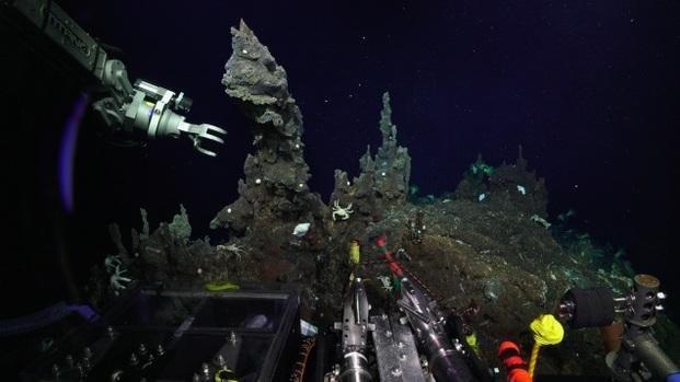 Revelan imágenes de las desconocidas profundidades oceánicas