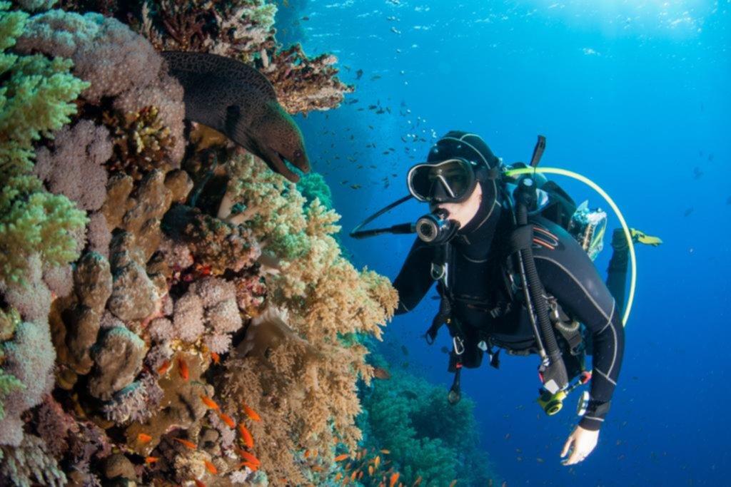 Debido al cambio climático, los corales de todo el mundo están contra las cuerdas