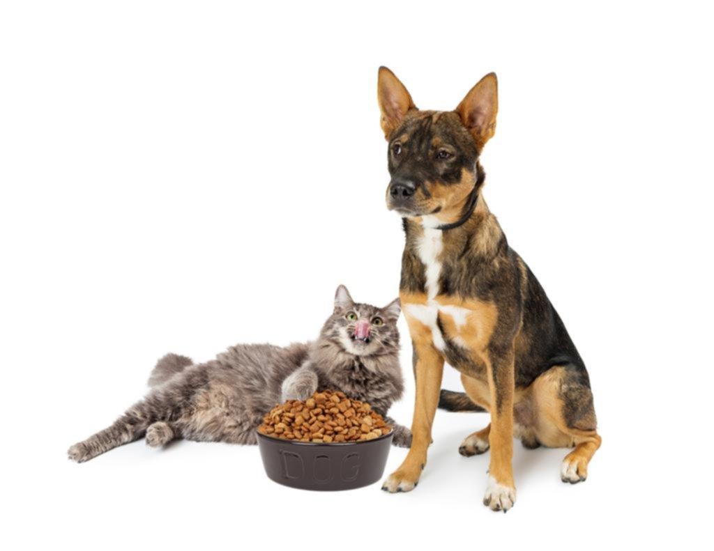 Darle carne cruda a las mascotas puede ser perjudicial para ellas y para los humanos