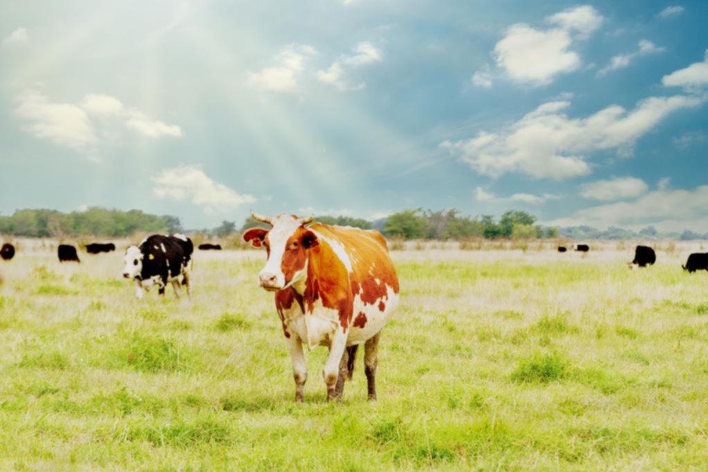 La multimillonaria inversión de Bill Gates por las vacas del futuro