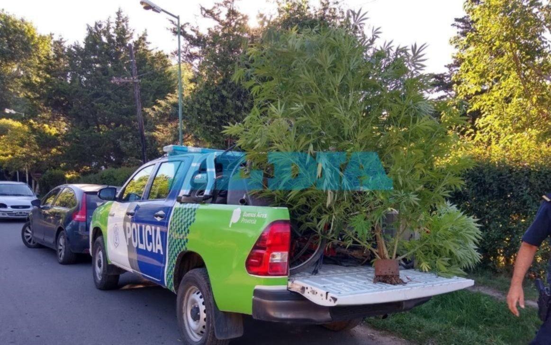 Arturo Seguí: buscaban una moto robada y se encontraron con un cultivo de marihuana