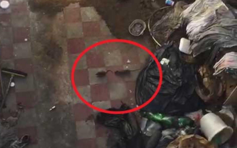 VIDEO.- Vecinos de El Mondongo en alerta por las ratas en el patio de una casa