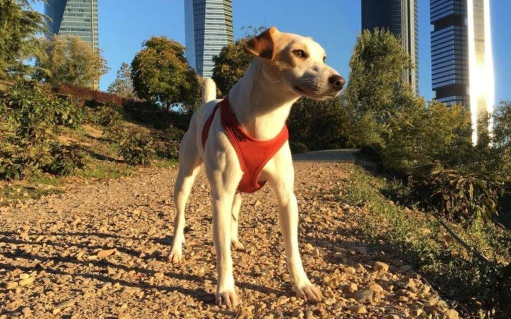 Pipper, el perro que promociona los viajes con mascotas