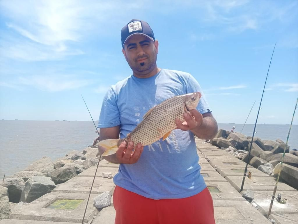Esta temporada se da una muy buena pesca de bogas y variada en la escollera de la Isla Paulino