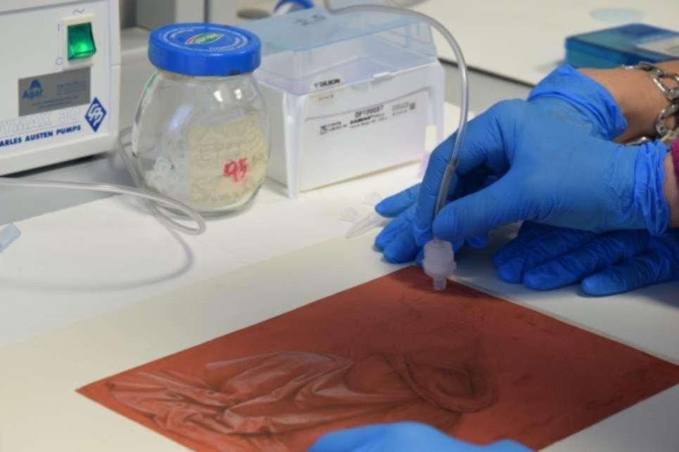 Arte con vida propia: los dibujos de Da Vinci tienen un ecosistema de bacterias único