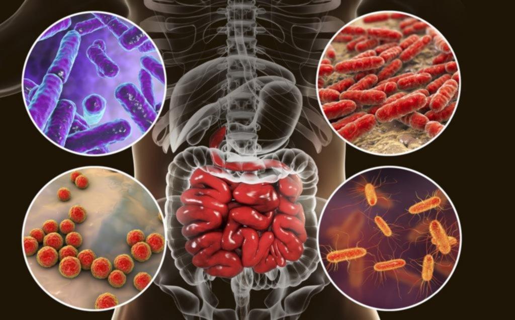 Confirman que en los intestinos está el secreto de la buena salud