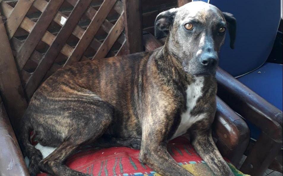 Hace 5 meses desapareció su perra en Los Hornos y la busca de manera desesperada
