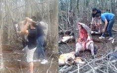 Una ONG podrá representar en un juicio a un caballo que fue asesinado a martillazos