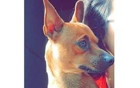 Les robaron un perro y lo recuperaron por Facebook