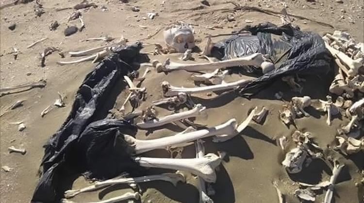 Encontraron 20 esqueletos humanos en Península Valdés