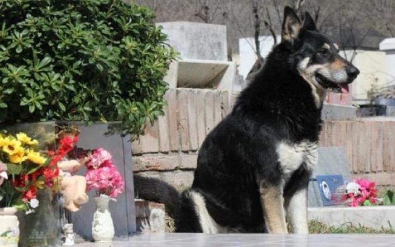 Muere el perro que visitaba la tumba de su amo