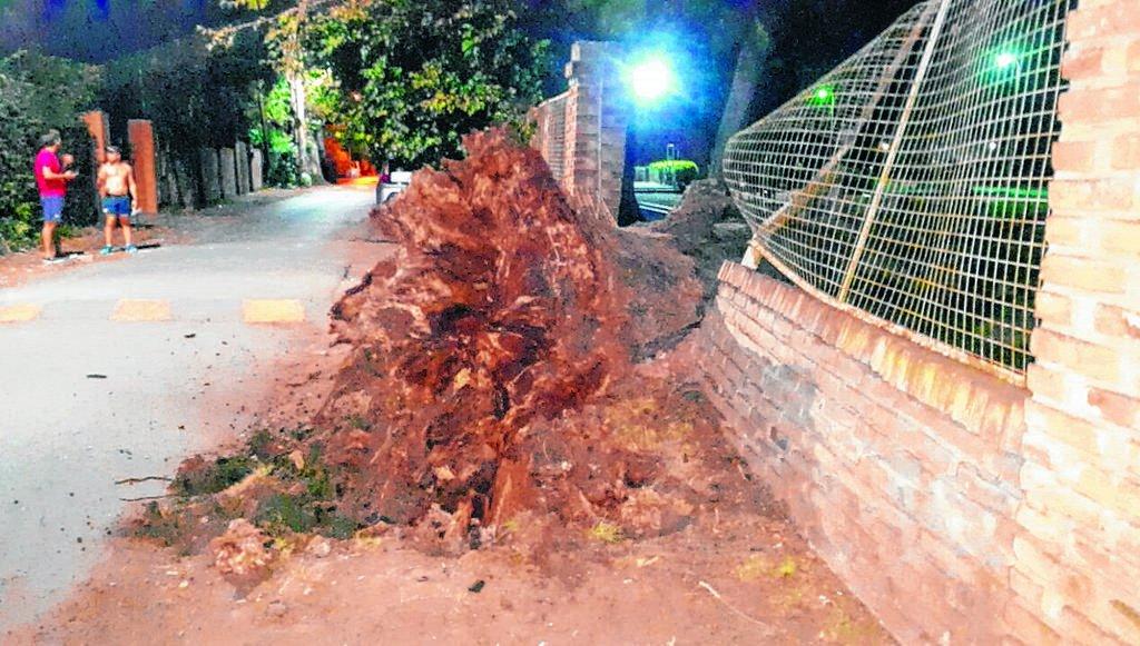 Gran susto por un árbol que se vino a pique en la República de los Niños