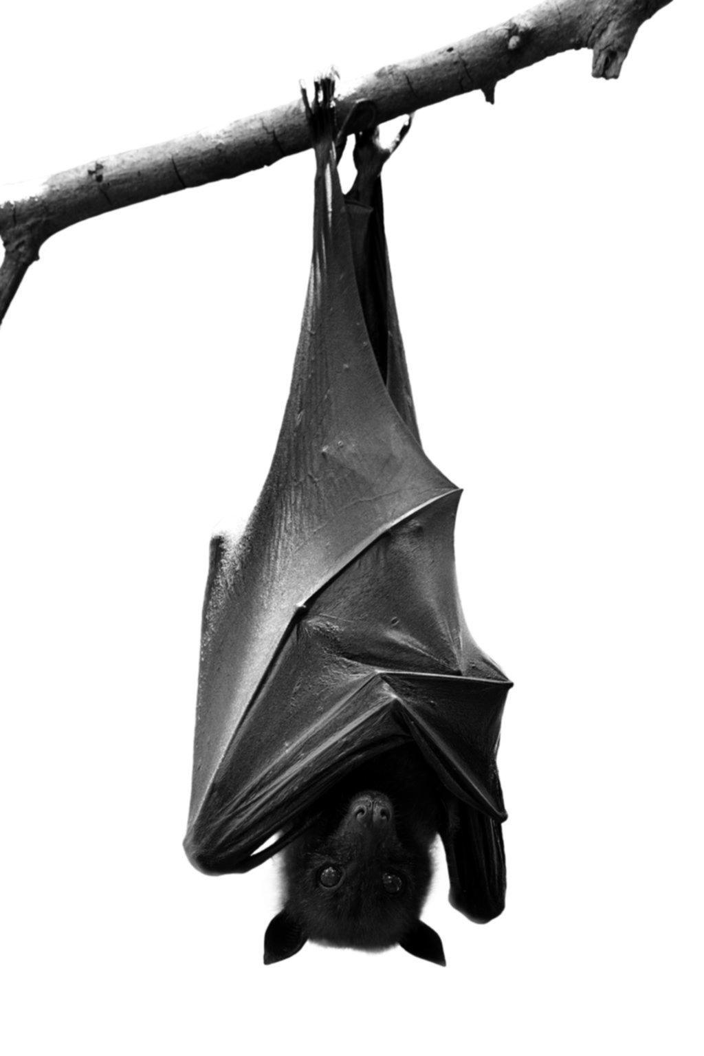 Ante la aparición de murciélagos con rabia, alerta y controles en las zonas implicadas