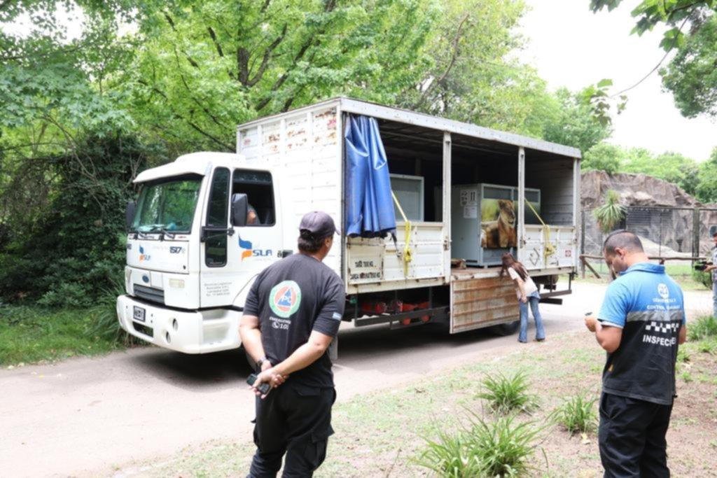 """Aún sin plazo de reapertura, la transformación del Zoo ahora se podrá """"monitorear"""" online"""