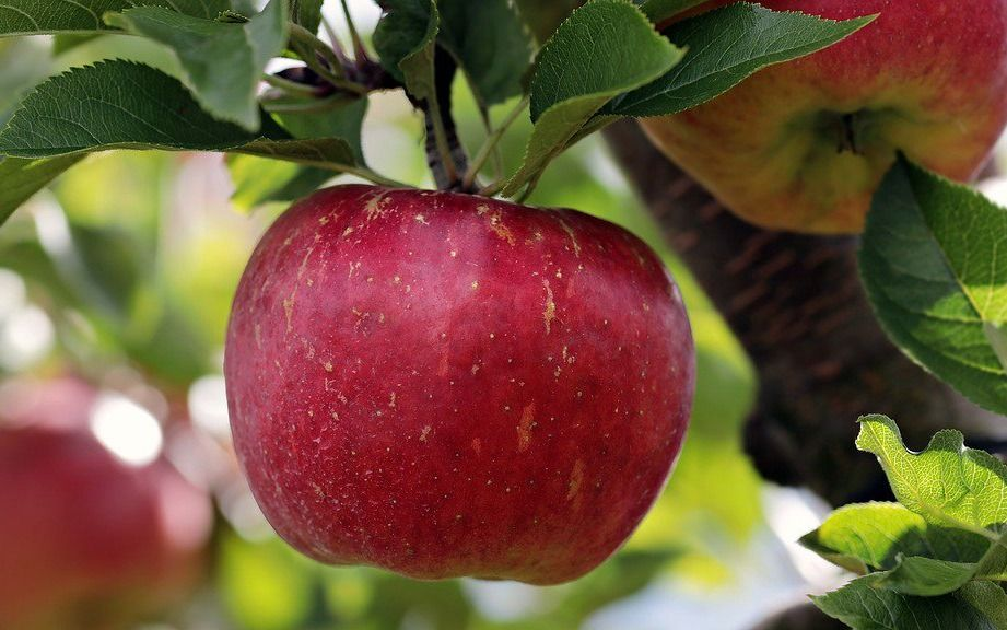 Brasil cerró importaciones a las peras y manzanas argentinas