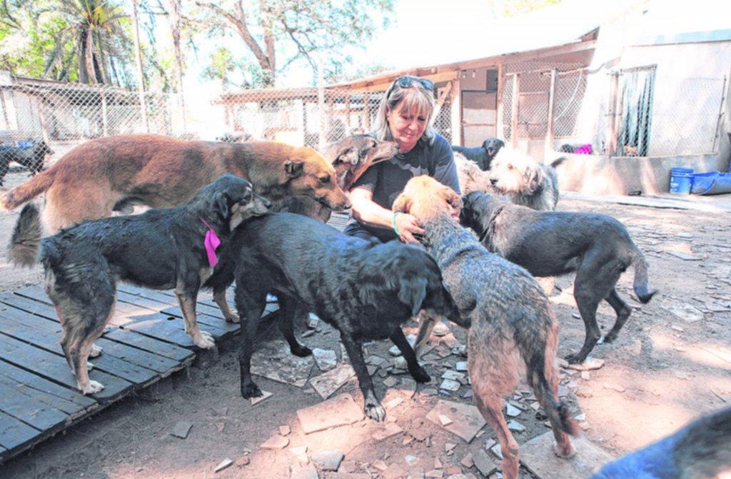 La mujer que le da todo lo que tiene a sus 600 perros
