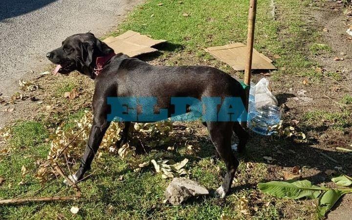 ¡Cuánta crueldad! Abandonaron un perro y lo dejaron atado a un canasto de basura en Gonnet
