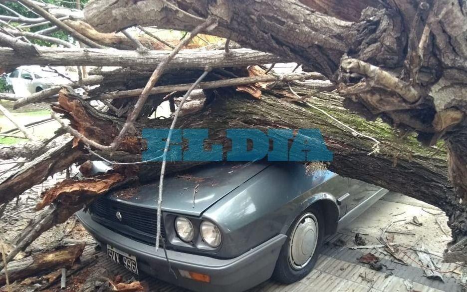 """En La Plata un enorme árbol aplastó un auto y """"casi mata a gente que pasaba"""""""