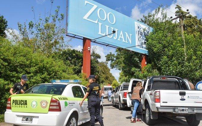 """Vuelven a clausurar jaulas de leones y tigres en el zoo de Luján por """"dejar entrar gente"""""""