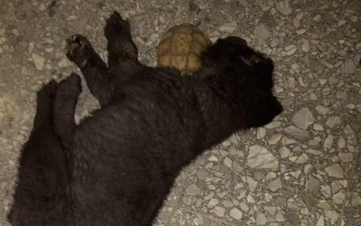 La sorprendente historia de amistad entre un perro y una tortuga en Ringuelet