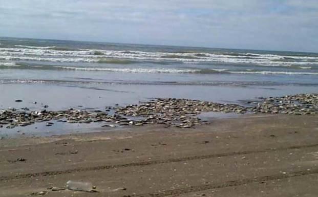 Investigan masiva muerte de peces en la Costa
