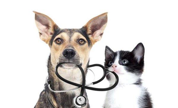 tratamiento dioctophyma renale perros