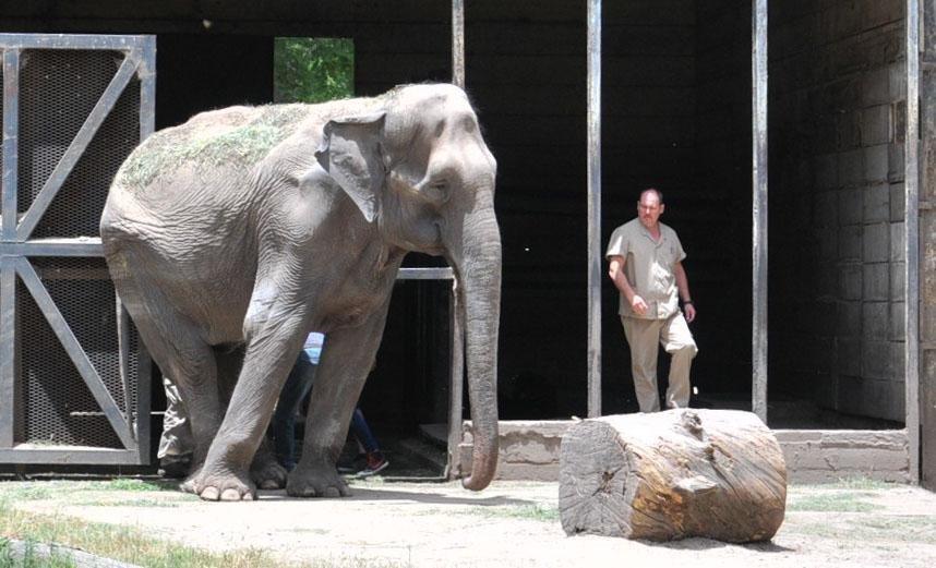 """El destino de """"Pelusa"""", la elefanta que creció con la Ciudad, espera en Brasil"""