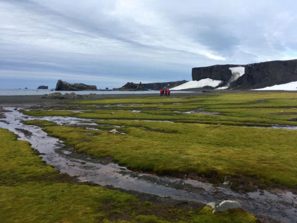 El cambio climático golpea a la Antártida: pierde 125 gigatoneladas de hielo por año