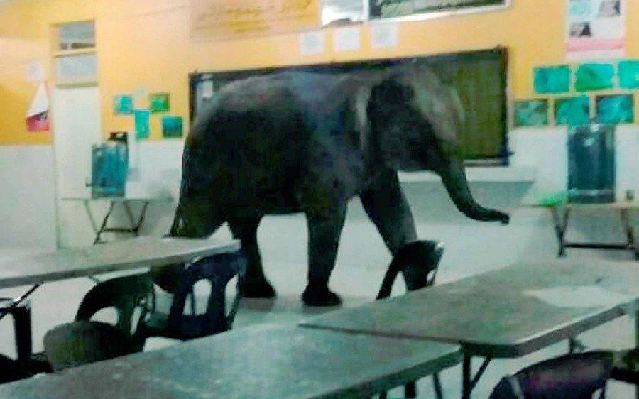 Ir a la escuela en Malasia puede ser peligroso: un elefante irrumpió en el edificio