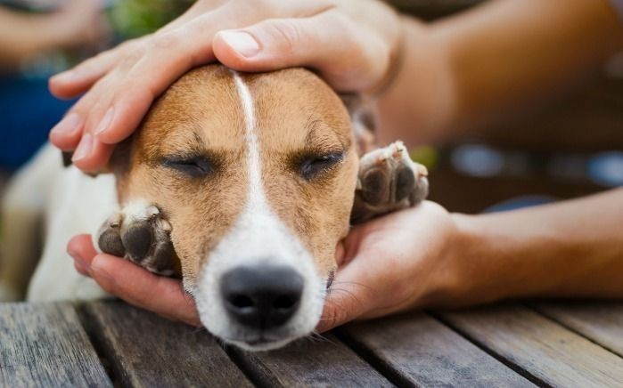 Aseguran que durante el verano crece el abandono de mascotas