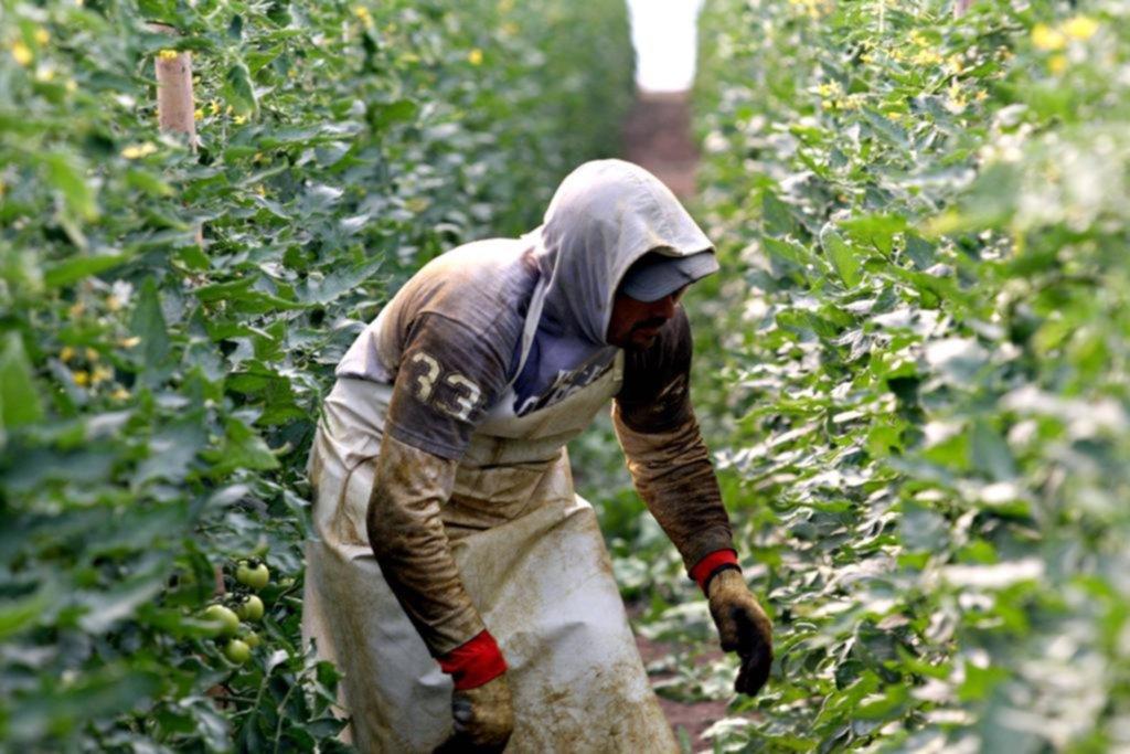 """El uso de agroquímicos abre la """"grieta"""" entre los ingenieros agrónomos"""