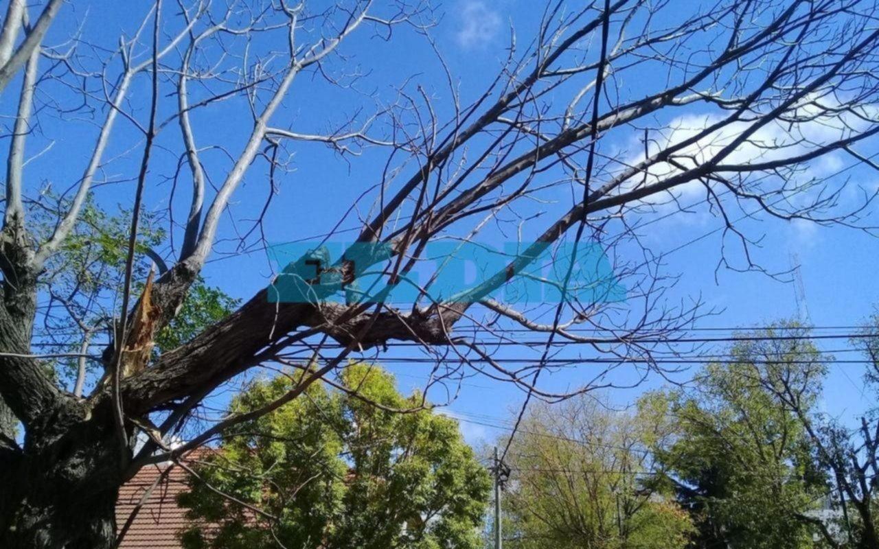 En 6 y 35 advierten que un árbol en mal estado podría dañar el tendido eléctrico