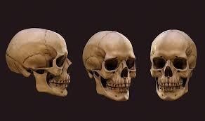 Un nuevo estudio indica que hubo sexo entre humanos primitivos hace 700.000 años