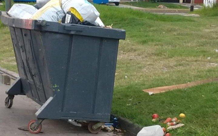 """En Tolosa, por la basura, las """"ratas parecen comadrejas"""" aseguran los vecinos"""