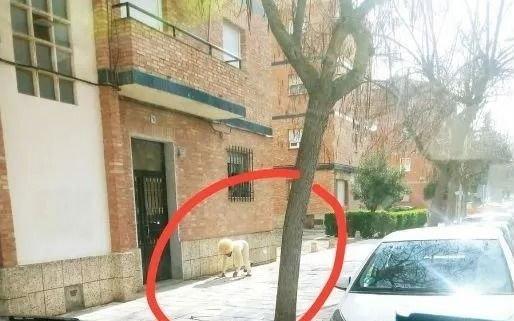 Insólito: se disfrazó de perro para violar la cuarentena y salió a pasear por el barrio