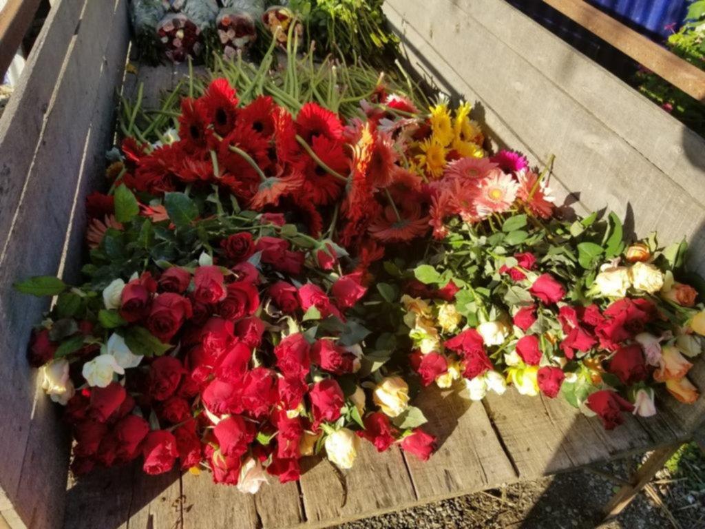 Las flores que el coronavirus marchitó en La Plata: cosechar y tirar a la calle