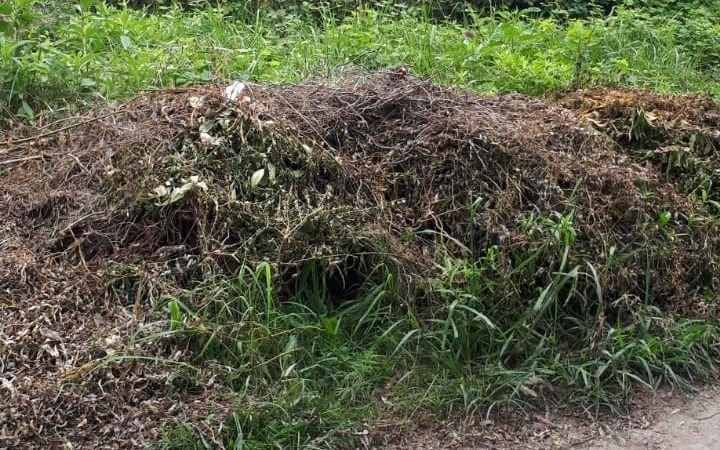 """Vecinos de City Bell reclaman por lotes abandonados: """"Aparecen ratas en mi casa"""""""