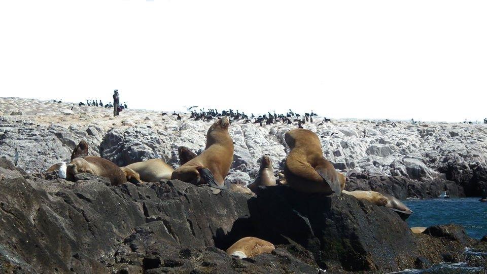 El Corredor de la Ruta Azul Entre fauna marina y naturaleza